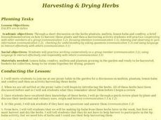 Harvesting and Drying Herbs Lesson Plan