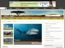 Sharkland Wiki Lesson Plan