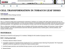 Cell Transformation in Tobacco Leaf Disks Lesson Plan