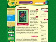 Bursting Blooms Lesson Plan Lesson Plan