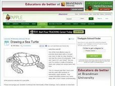 Drawing a Sea Turtle Lesson Plan