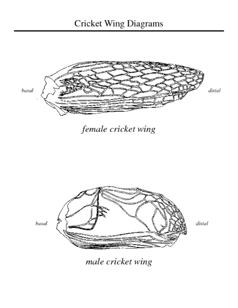 Cricket Wing Diagram Worksheet For 5th 6th Grade Lesson Planet