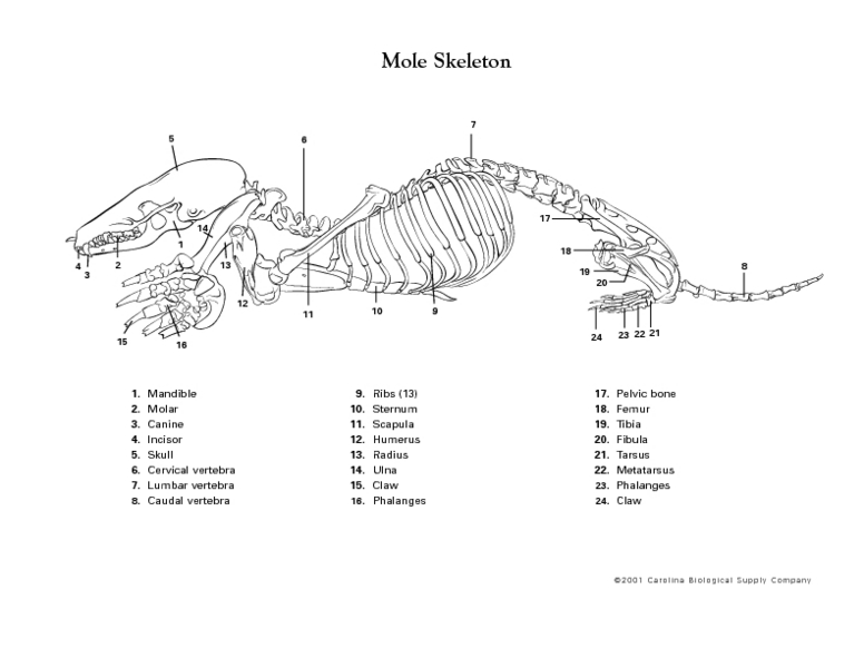 Skeleton Lesson Plans & Worksheets Reviewed by Teachers