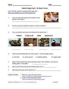 Internet Assignment : All About Ducks Research Worksheet Worksheet