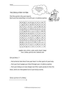 The Circulatory System-Word Search Worksheet