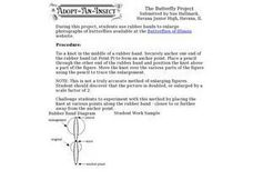 The Butterfly Project Worksheet