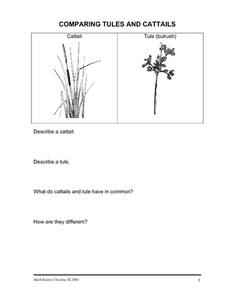 Comparing Tules and Cattails Worksheet