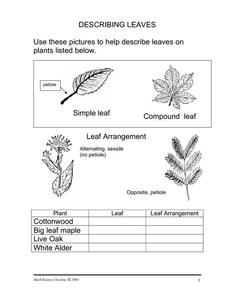Describing Leaves Worksheet for 7th - 9th Grade | Lesson Planet