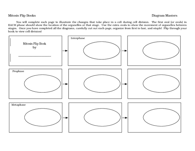 Mitosis Flip Book 7th 9th Grade Worksheet – Stages of Mitosis Worksheet Answers