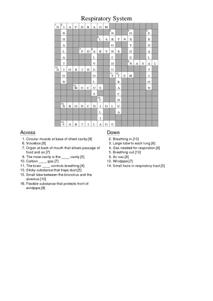 Respiratory System Crossword Puzzle Answers Worksheet for 7th - 8th