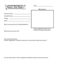 Adopt-An-Insect II Worksheet