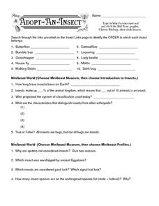 Adopt-An-Insect III Worksheet