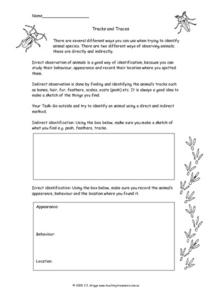 Tracks and Traces Worksheet
