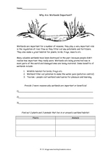 Why Are Wetlands Important? Worksheet