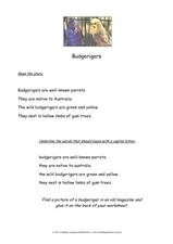 Budgerigars Worksheet