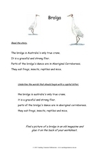 Brolga Worksheet