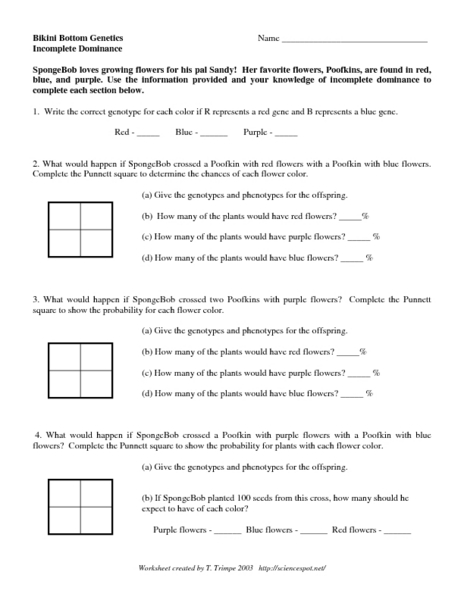 Codominance Worksheet Punnett Square - Studimages.com