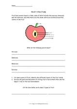 Fruit Structure Worksheet
