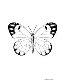 Butterfly Drawing Worksheet