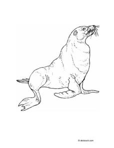 Sea Lion Drawing Worksheet