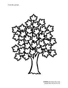 tree with leaves picture Worksheet