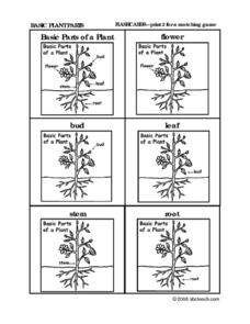 Identify parts of a plant Worksheet