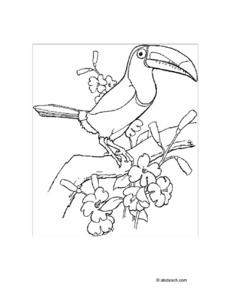 Bird Line Drawing Worksheet