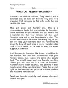 What Do I Feed My Hamster?: Reading Comprehension Worksheet
