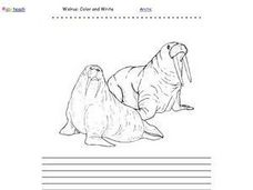 Walrus Color And Write Worksheet