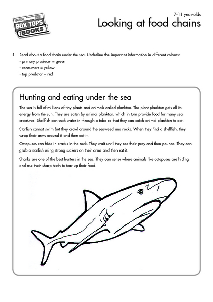 Looking at Food Chains Worksheet for 3rd - 4th Grade   Lesson Planet