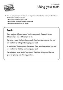 Using Your Teeth Worksheet
