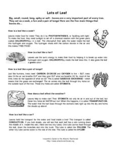 Lots of Leaf Lesson Plan