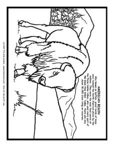 American Bison Information and Coloring Page Worksheet
