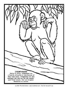 Chimpanzee Information and Coloring Page Worksheet