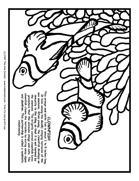 Clownfish Information and Coloring Page Worksheet for 3rd
