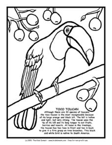Toco Toucan Information and Coloring Page Worksheet