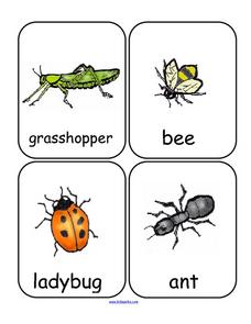 Insects Word Wall Printables & Template
