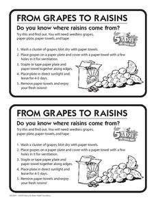 From Grapes to Raisins Activities & Project
