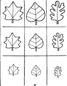 Types Of Leaves Worksheet
