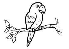 Parrot Drawing Worksheet
