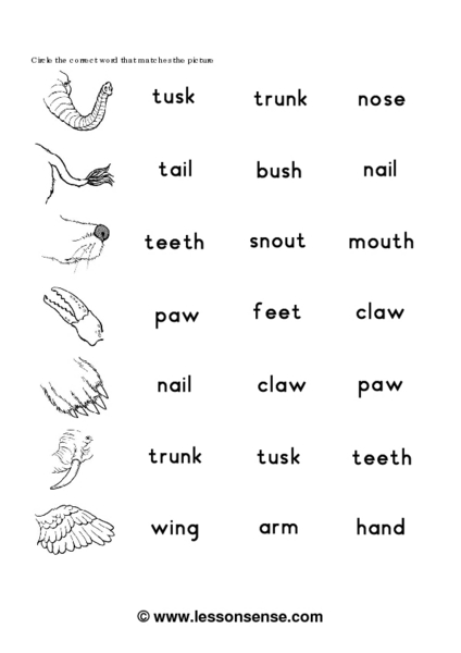animal body parts vocabulary worksheet for 1st 2nd grade lesson planet. Black Bedroom Furniture Sets. Home Design Ideas
