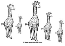 Sequencing the Giraffes Worksheet