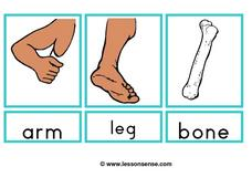 Body Parts Picture Cards Worksheet