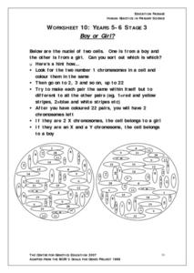 Boy or Girl? Worksheet