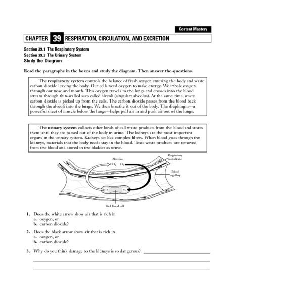 The Respiratory and Urinary System Worksheet for 5th - 12th