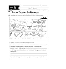 Energy Through the Ecosystem Worksheet for 3rd - 8th Grade | Lesson ...