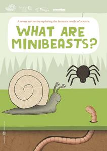 What are Minibeasts? Worksheet