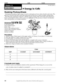 Studying Photosynthesis Worksheet