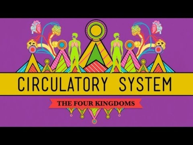 Circulatory and Respiratory Systems Video