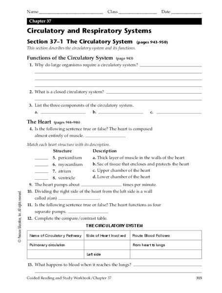 circulatory system worksheets fifth grade circulatory best free printable worksheets. Black Bedroom Furniture Sets. Home Design Ideas